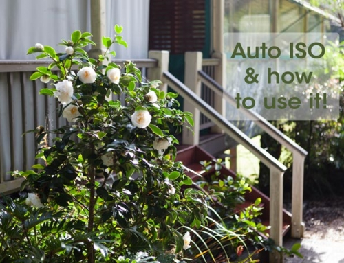 Auto ISO and how to use  it